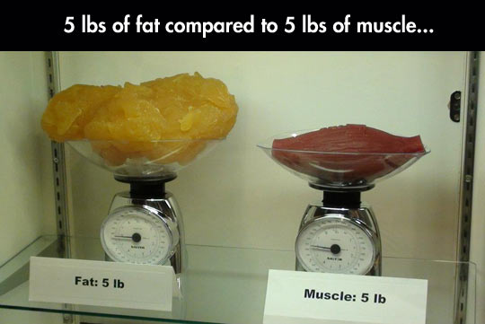 The Must Know Truth – Weight loss VS Stored body fat loss